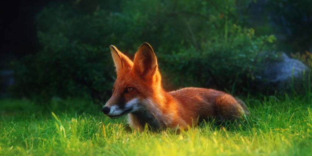 fox-1522156-1279x890__1450786579_5.178.50.202